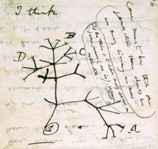 Darwin, Notes, Notebook