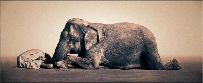 elephant-lying-down-and-a-faithful-friend-bowing